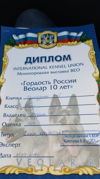 ВОСТОЧНО-ЕВРОПЕЙСКАЯ ОВЧАРКА ВЕОЛАР  ЦИНТУРИОН РЭЙ 20180710