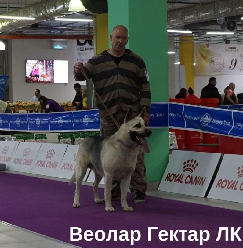 ВОСТОЧНО-ЕВРОПЕЙСКАЯ ОВЧАРКА ВЕОЛАР ГЕКТОР - Страница 2 Fb_img10