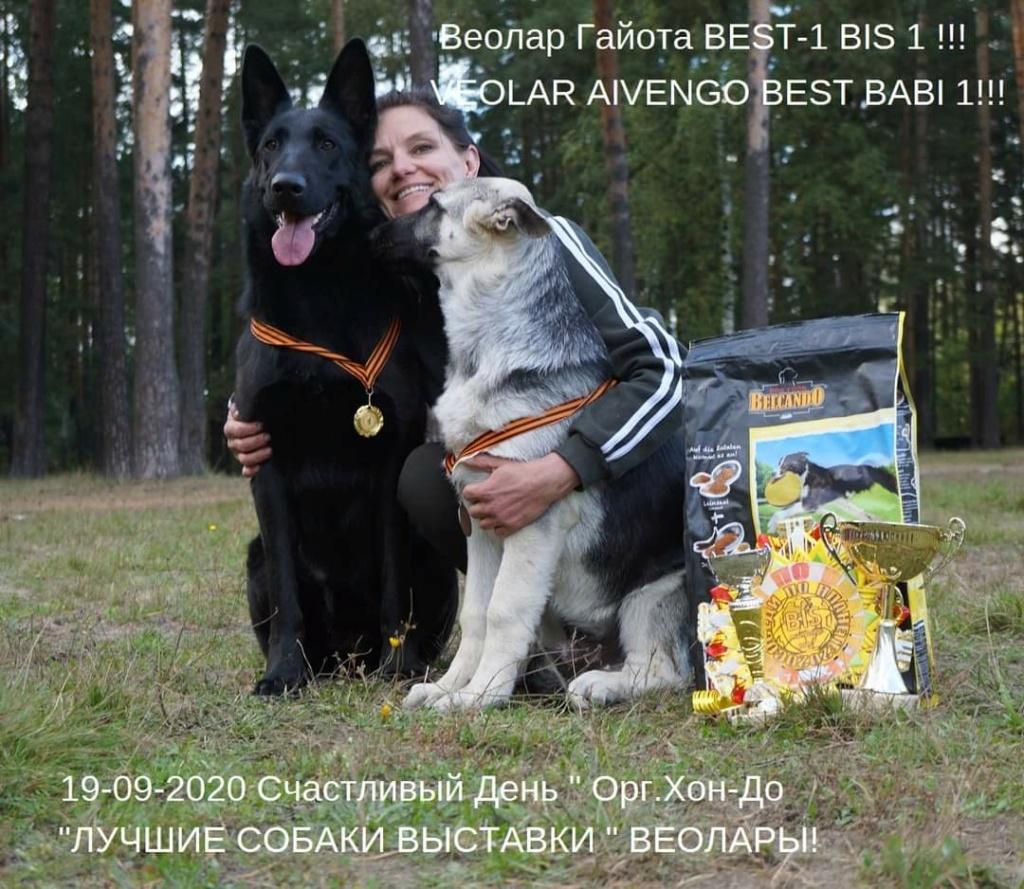 ВОСТОЧНО-ЕВРОПЕЙСКАЯ ОВЧАРКА ВЕОЛАР  ГАЙОТА (Черная) Fb_img17