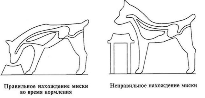 обязательна ли для Сибы миска на подставке на уровне роста собаки - Страница 2 Ae352a10