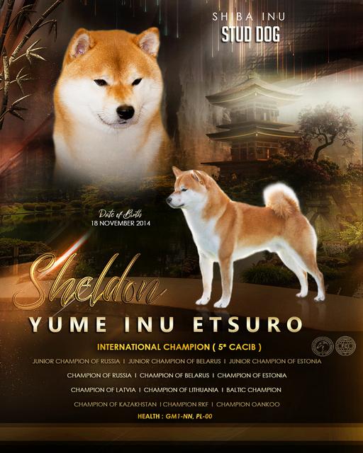 YUME INU ETSURO (SHELDON), г. Санкт-Петербург Sheldo15