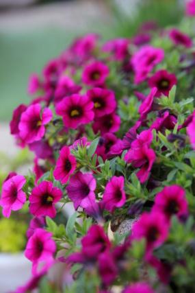 [Fil ouvert] Fleurs et plantes - Page 17 0b6a1113