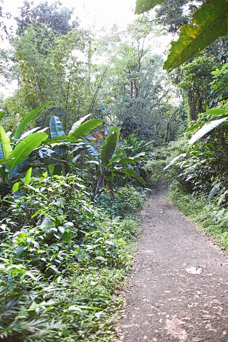 Balade en Guadeloupe 0b6a5752