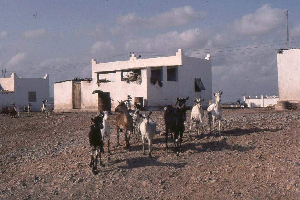 [Campagne] DJIBOUTI - TOME 1 - Page 26 Djibo127