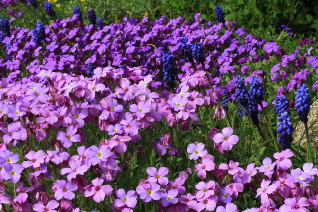 [Fil ouvert] Fleurs et plantes - Page 14 Img_2913