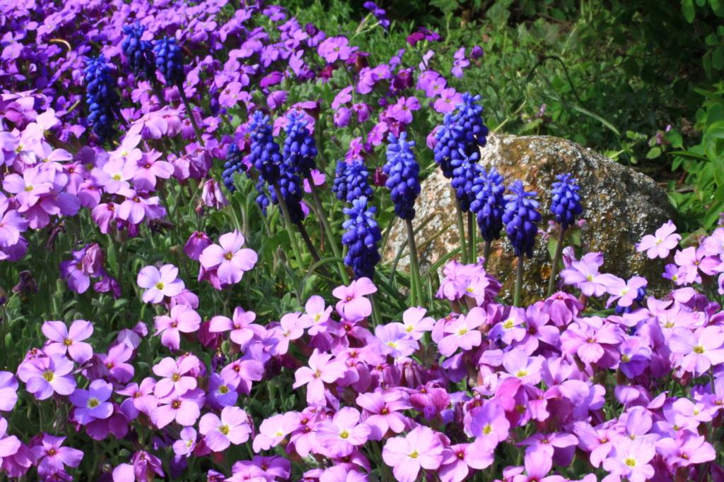 [Fil ouvert] Fleurs et plantes - Page 14 Img_2914