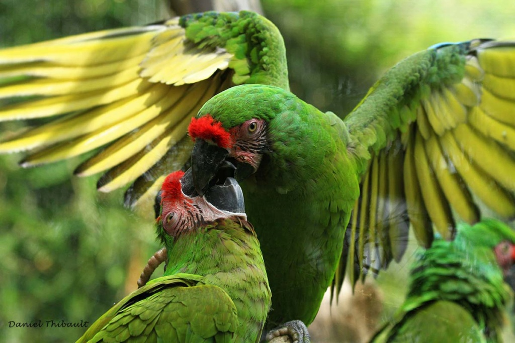 [Ouvert] FIL - Oiseaux. - Page 29 Img_3010