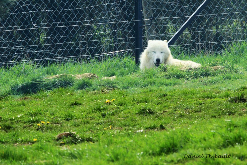 [Ouvert] Animaux divers. - Page 30 Img_3117