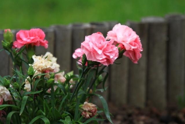 [Fil ouvert] Fleurs et plantes - Page 15 Img_3611