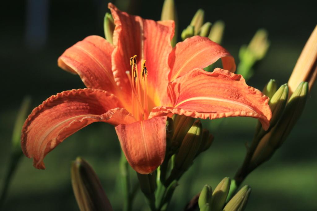 Thème du mois d'octobre 2019 :   Fleurs et jardins  Img_7910
