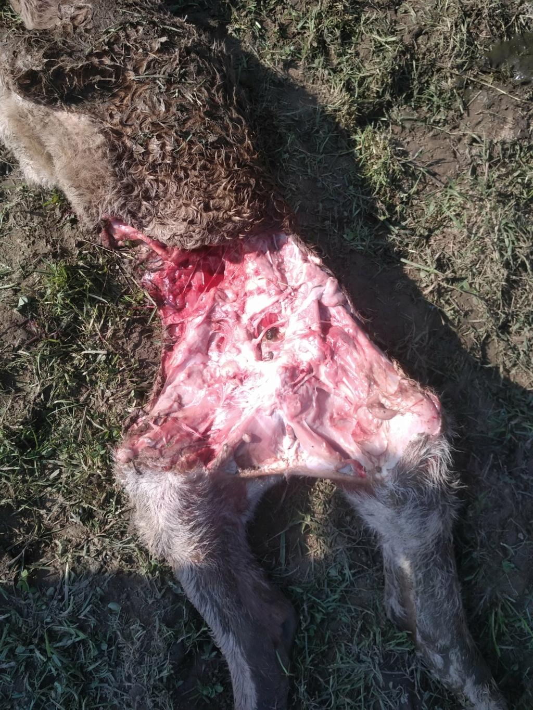 Le blaireau, prédateur Img_2012