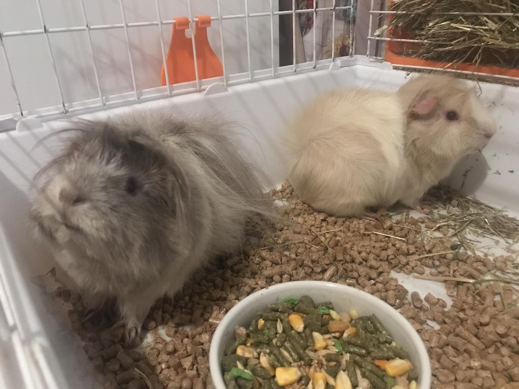Adopción de dos hembras  Img_2416