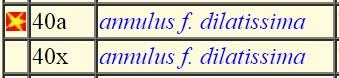 Monetaria annulus f. dilatissimus voir Monetaria annulus f. dilatissima (Lorenz, 2017) - Page 2 000117