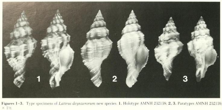 Latirus deynzerorum - Emerson & Sage, 1990  0118