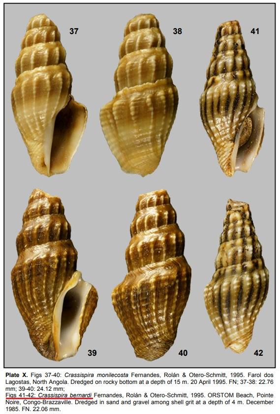 Crassispira bernardi (F. Fernandes, Rolán & Otero-Schmitt, 1995) Crass10