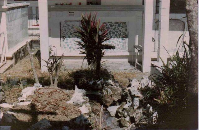 Strombidae Aliger gigas - (Linnaeus, 1758) Gwad0210