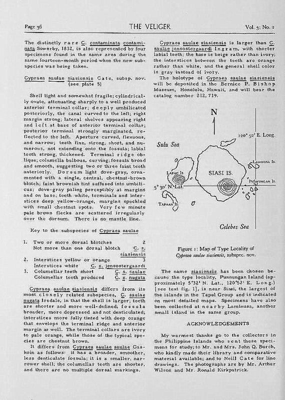 Palmadusta saulae siasiensis - (Cate, 1960) P_saul26