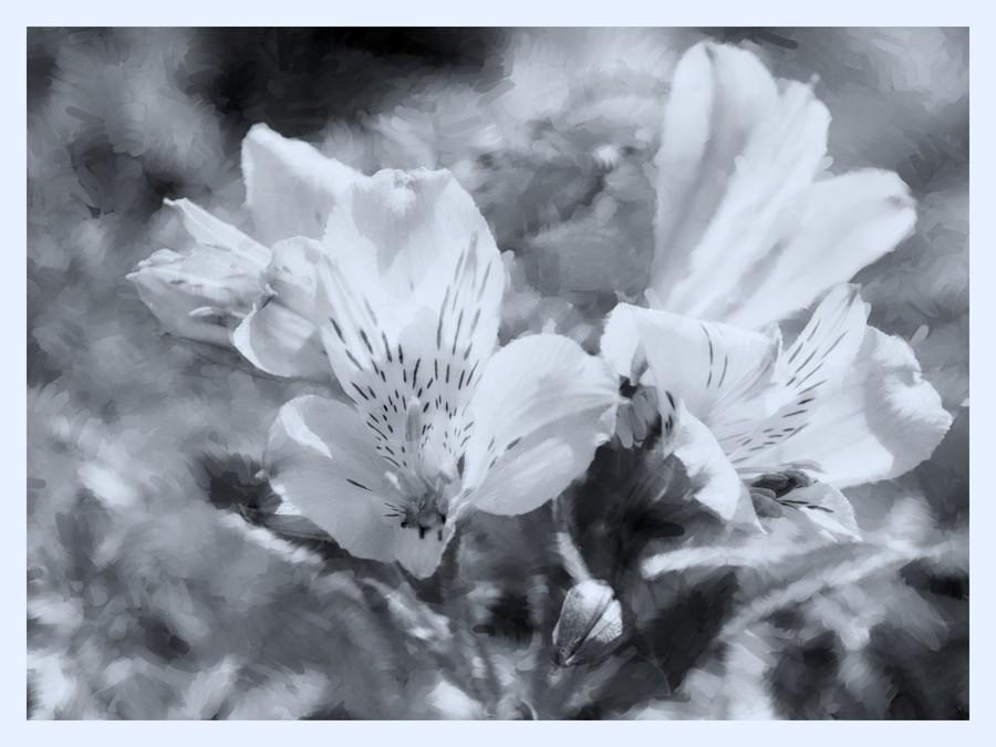 Photographie et peinture numérique P5164510