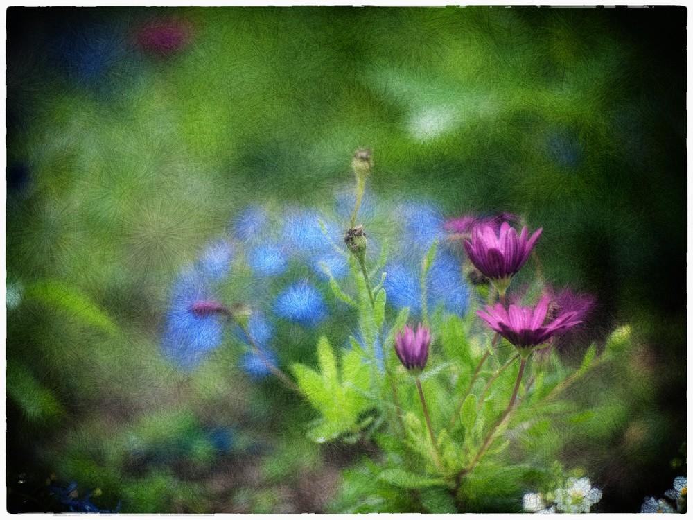 Photographie et peinture numérique P6215010