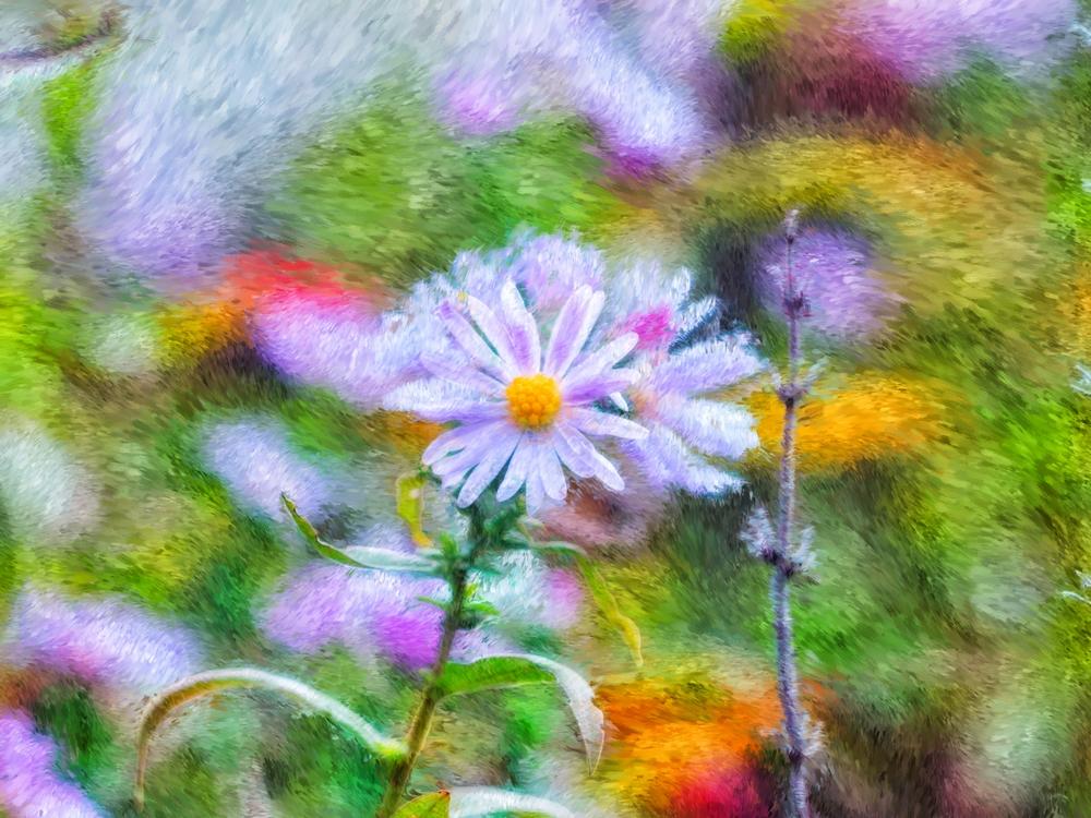Photographie et peinture numérique Pa225010