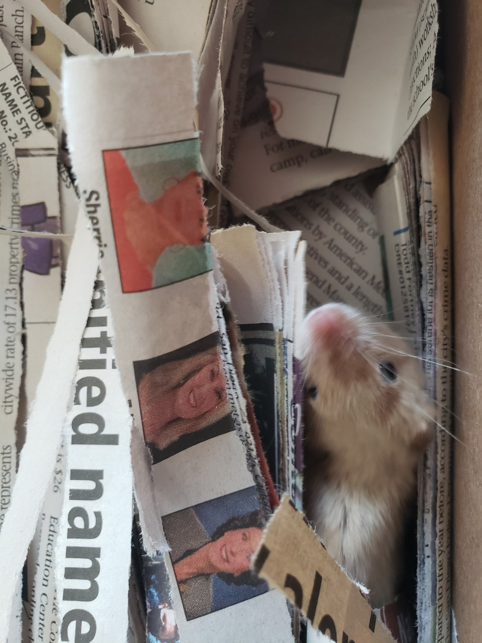 rehoming female mouse in San Diego 210