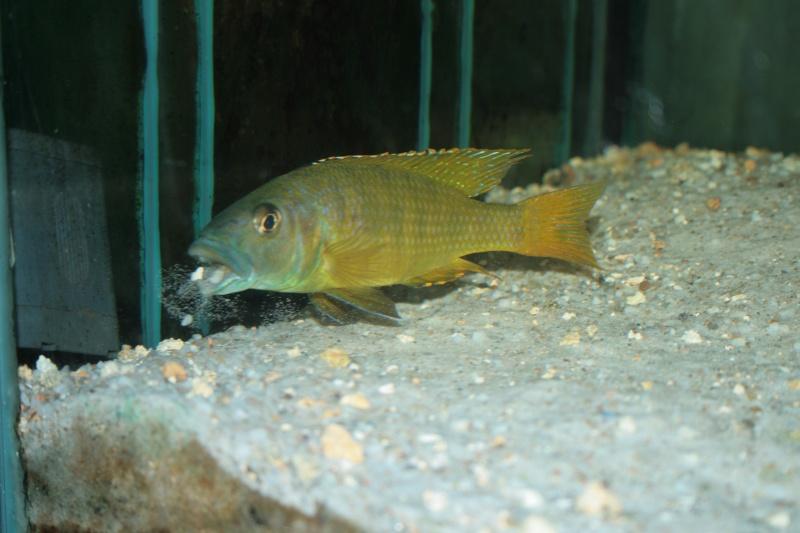 Ce post pour des photos marrantes de vos aquariums Img_1210