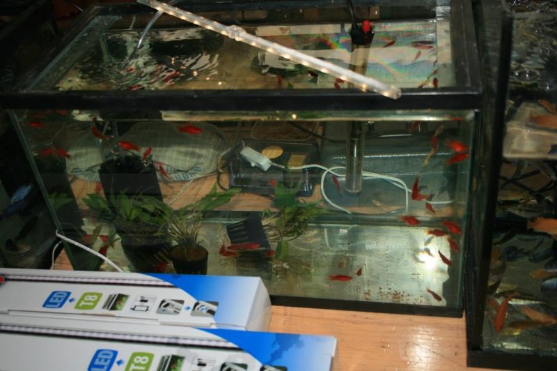 1er bourse aux plantes aquatiques le 19 juin Img_9616