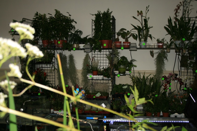 1er bourse aux plantes aquatiques le 19 juin Img_9637