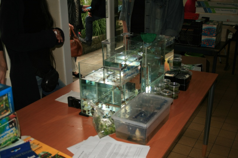 1er bourse aux plantes aquatiques le 19 juin Img_9659