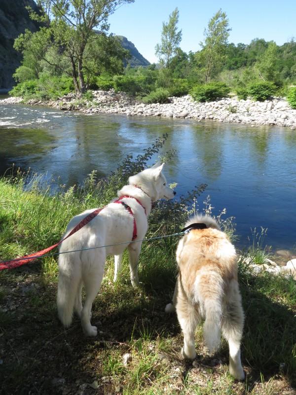 Yocco et Anook en Ardèche et en Provence 03_yoc10
