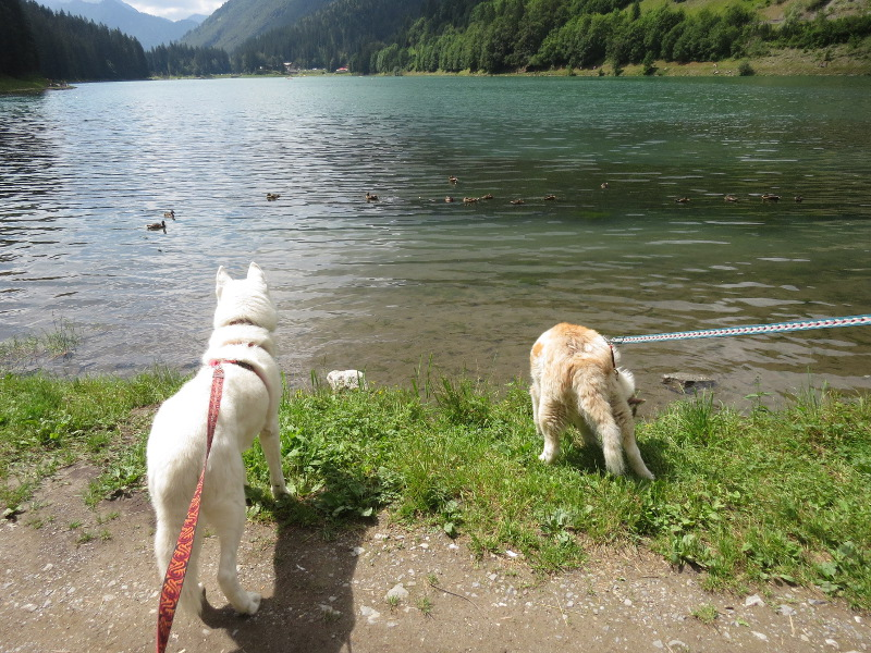 Yocco et Anook dans les Alpes 06_yoc10