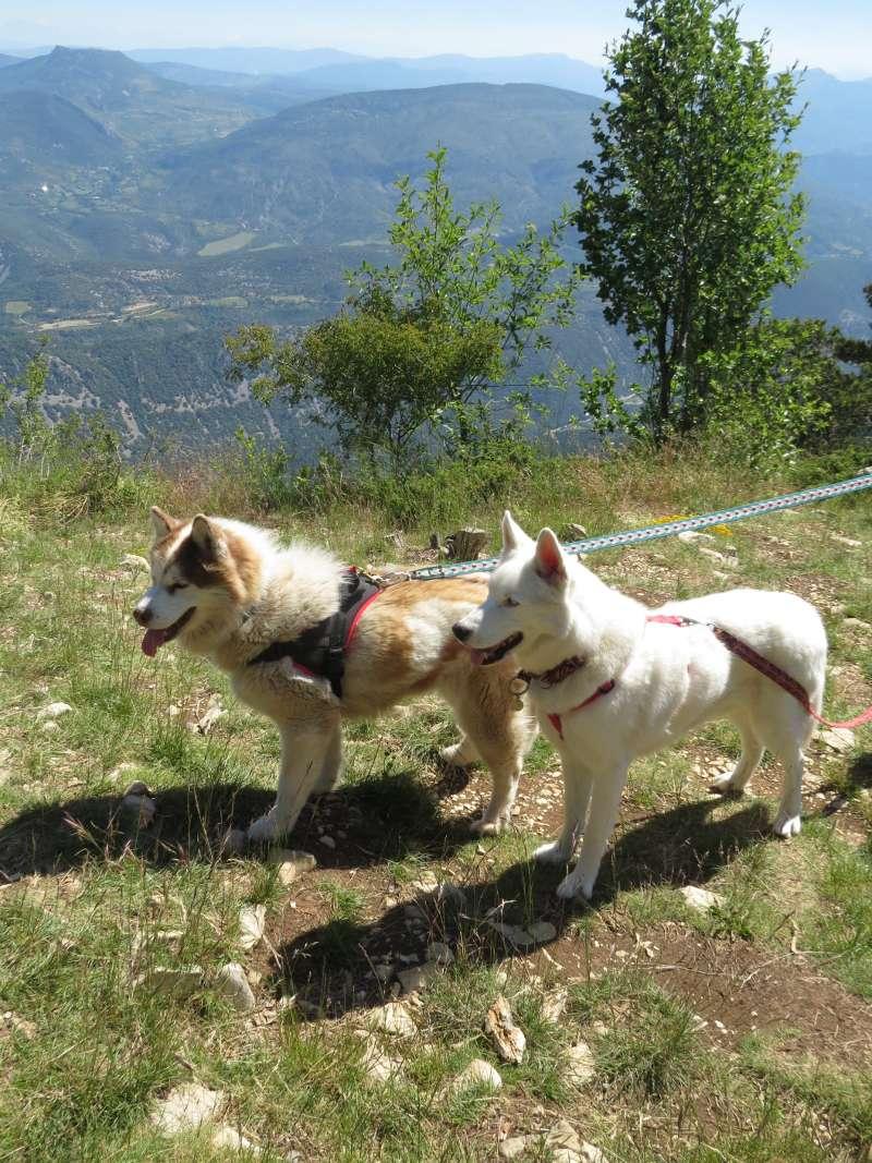 Yocco et Anook en Ardèche et en Provence 17_ano10