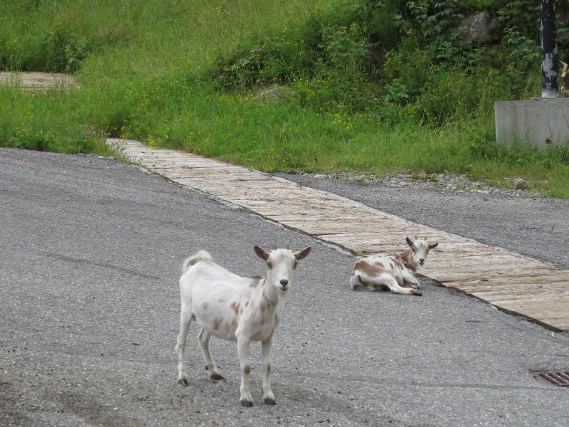 Yocco et Anook dans les Alpes 18_che10