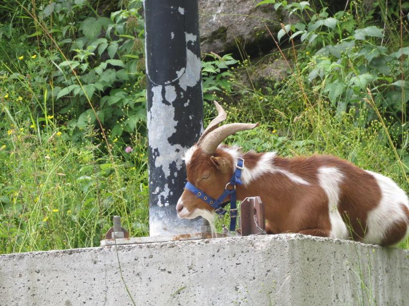 Yocco et Anook dans les Alpes 19_chy10