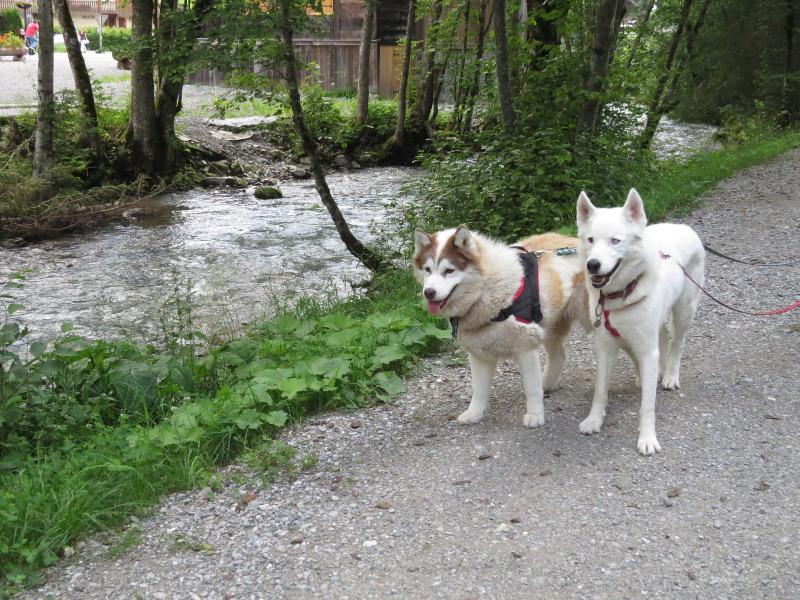 Yocco et Anook dans les Alpes 22_yoc10