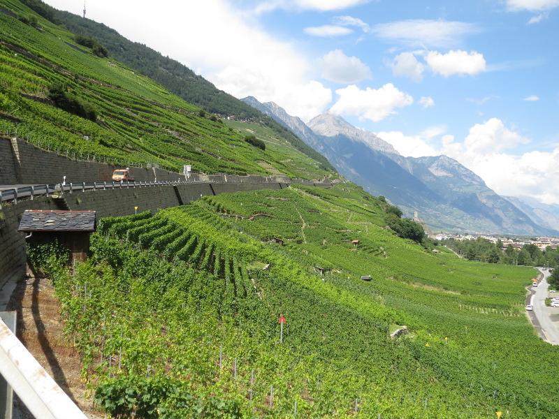 Yocco et Anook dans les Alpes 26_vig11