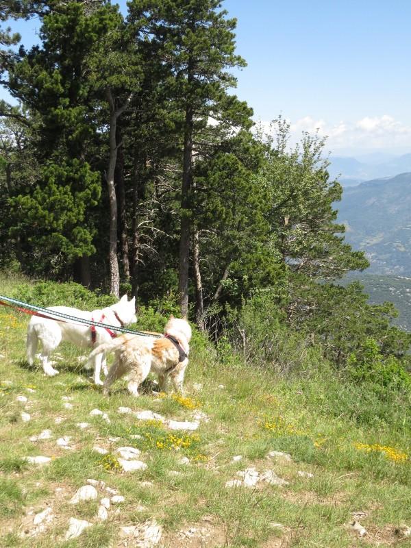 Yocco et Anook en Ardèche et en Provence 28_yoc10