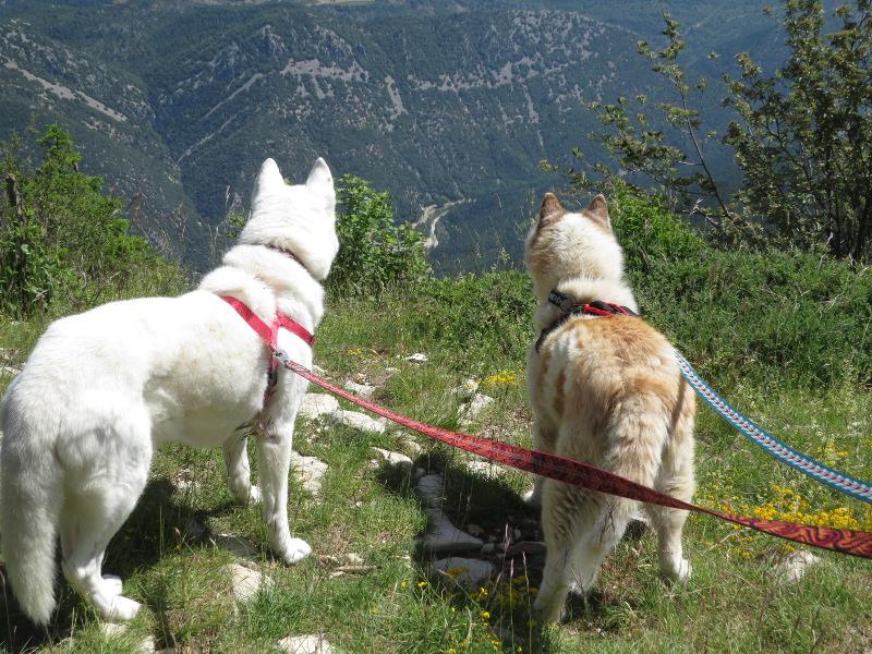 Yocco et Anook en Ardèche et en Provence 29_yoc10