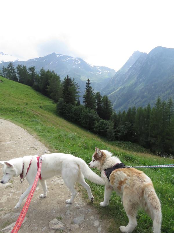 Yocco et Anook dans les Alpes 29_yoc12