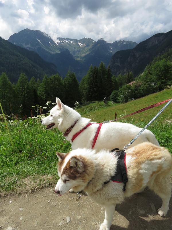 Yocco et Anook dans les Alpes 31_yoc11