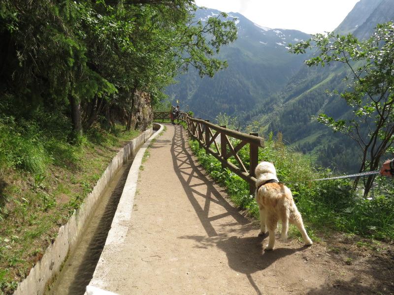 Yocco et Anook dans les Alpes 32_ano11