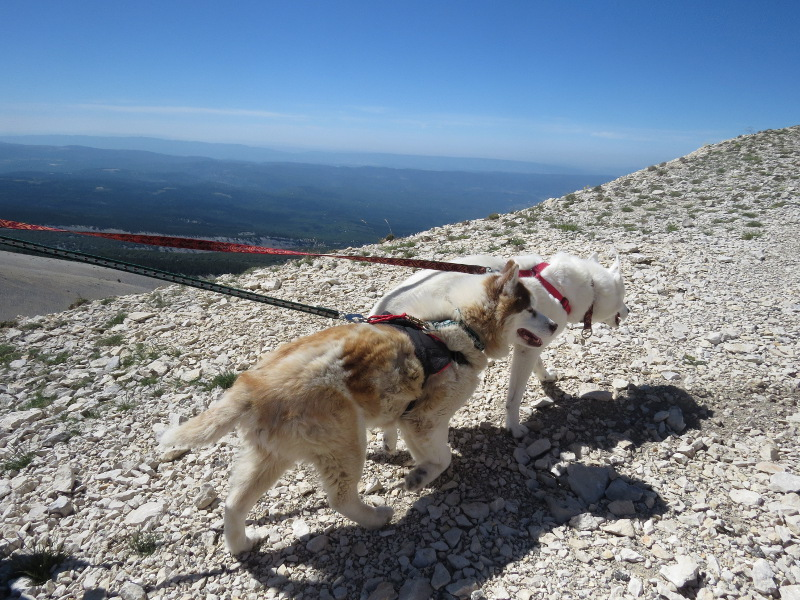 Yocco et Anook en Ardèche et en Provence 34_yoc10