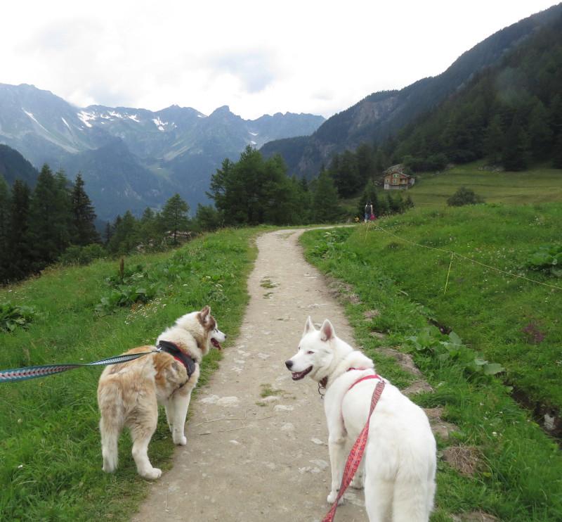 Yocco et Anook dans les Alpes 35_ano11