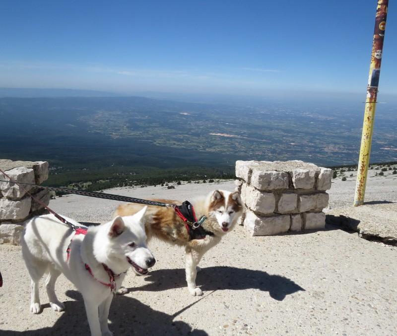 Yocco et Anook en Ardèche et en Provence 36_yoc10