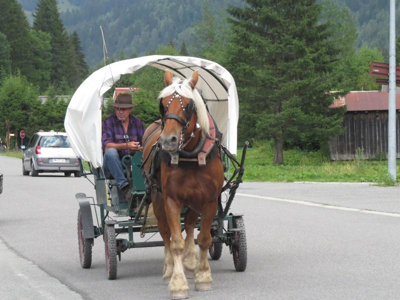 Yocco et Anook dans les Alpes 37_cal10
