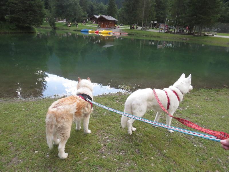 Yocco et Anook dans les Alpes 38_ano10