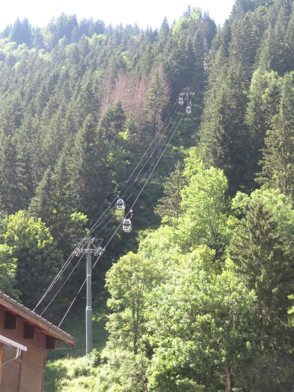 Yocco et Anook dans les Alpes 43_tyl10