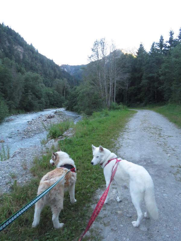 Yocco et Anook dans les Alpes 55_ano11