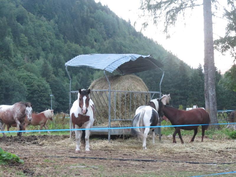 Yocco et Anook dans les Alpes 56_che10