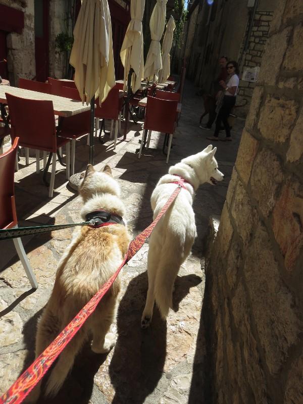 Yocco et Anook en Ardèche et en Provence 57_ano10